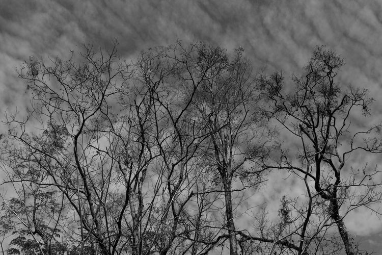 Tree Bare Tree Plant Branch Cloud - Sky Sky Nature No People Day Low Angle View Tranquility Beauty In Nature Outdoors Scenics - Nature Growth Non-urban Scene Tranquil Scene Dead Plant Backgrounds
