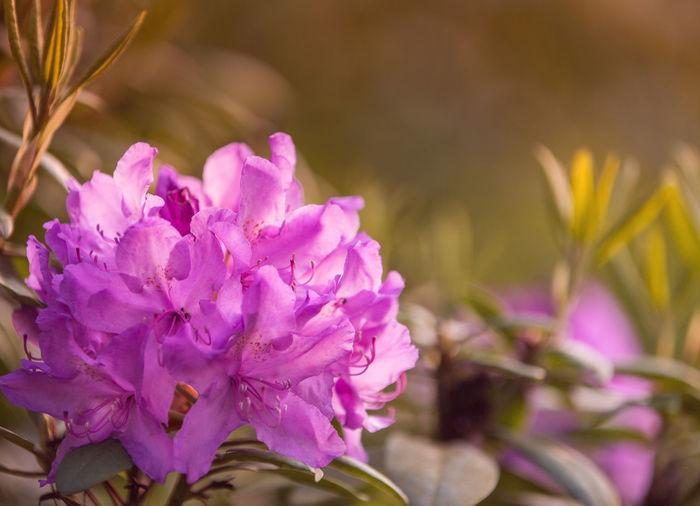 Canon Flower