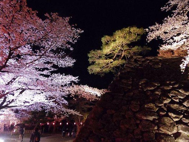 古城のほとり 小諸 懐古園 桜 QS1 Pentax