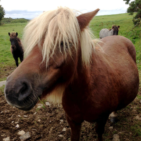 Horse Pony Countryside Rural Animals Summer Wild Horses Dartmoor Devon Britain