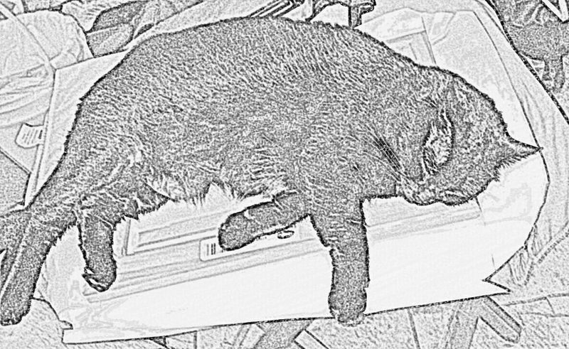 Freedom special effects black and white for a b km ack cat Enjoying Life Cats 🐱 Pet Photography  Cat Lovers Black And White