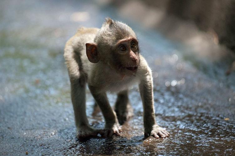 Cute monkeys in the forest