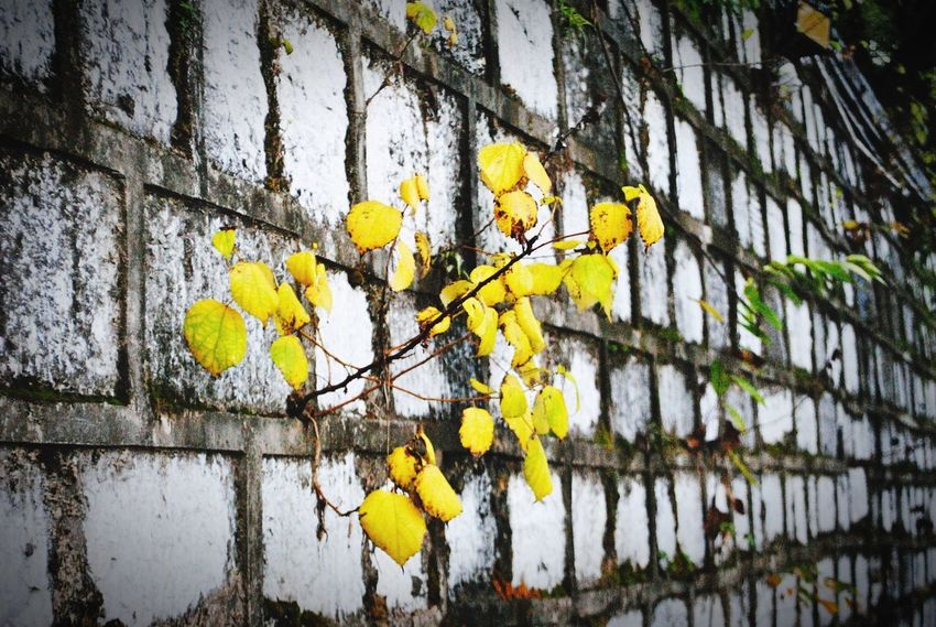 Architecture Yellow Wall - Building Feature Built Structure Day Building Exterior Outdoors No People Growth Close-up Branch Tree Nature