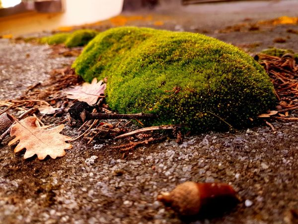 winter time.... Verde Focus On Foreground Contrast Contrasting Colors Muschio Winter Wintertime Moss & Lichen My Point Of View Toscana Inverno Green Winter Colors Giochi Di Luce Looking Strano Mattina Presto Muschio Verde Nature No People Leaf Green Color Growth Day Close-up Outdoors Moss Beauty In Nature Plant