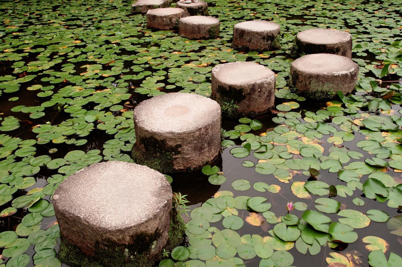 High Angle View Of Concrete Poles And Lily Pads On Pond