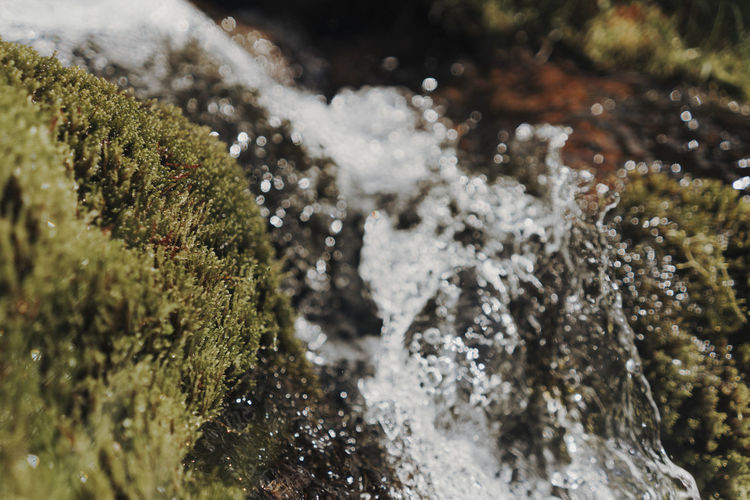 Close-up of water flowing on rock