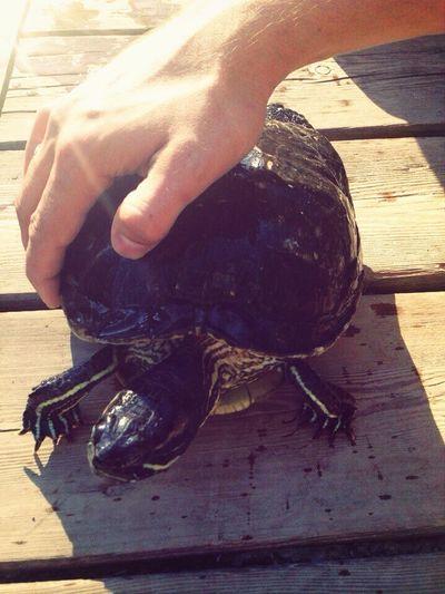 Черепах?? черепаха ботаническийсад ботанический сад