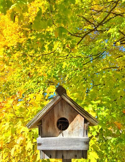 Check This Out Autumn Autumn Colors Nature EyeEm Gallery EyeEmBestPics SimcoeCounty Eye4photography  EyeEm Best Shots Taking Photos