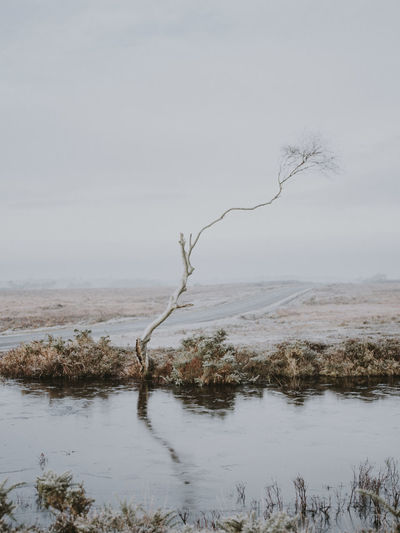 Singe weather worn tree Water Tranquility Tree Plant Nature No People Beauty In Nature Tranquil Scene Scenics - Nature Sky Day Non-urban Scene Land Outdoors Bare Tree Environment Landscape Branch Lake