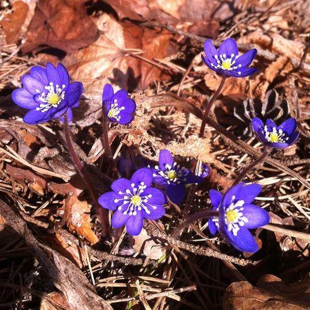 Enjoying The Sun Spring Flowers IPhone 4 Atwork