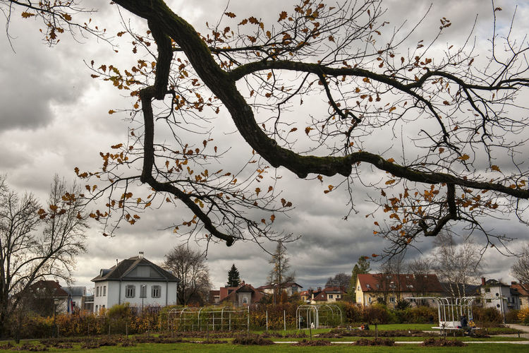 Houses and trees on field against sky