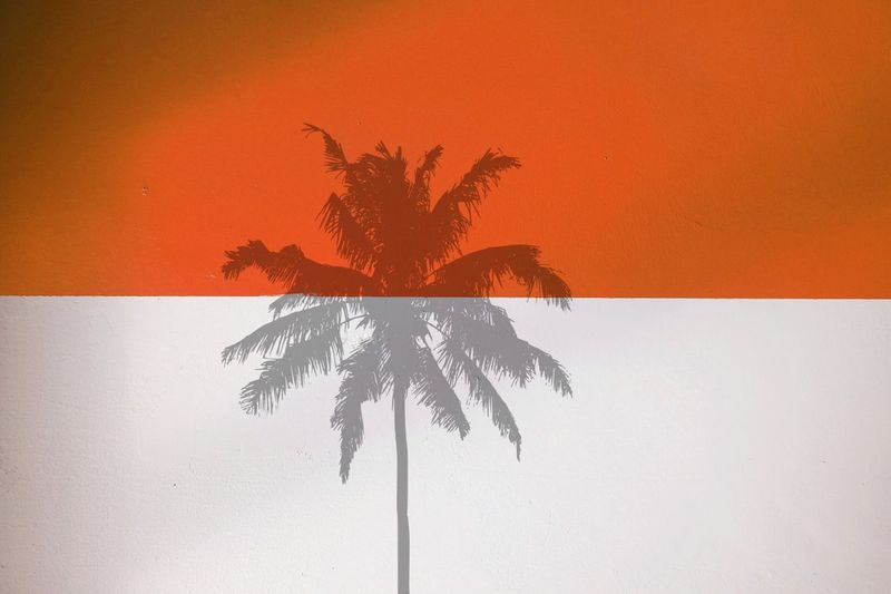 Shadow of palm tree on the wall Minimalism Minimal Colors Eye4photography  EyeEm Gallery EyeEm Selects Lights Still Life Light And Shadow Shadows & Lights Shadow Reflection Palm Tree Abstract No People Close-up Art And Craft Creativity Orange Color Paint Wall - Building Feature Backgrounds Nature Plant