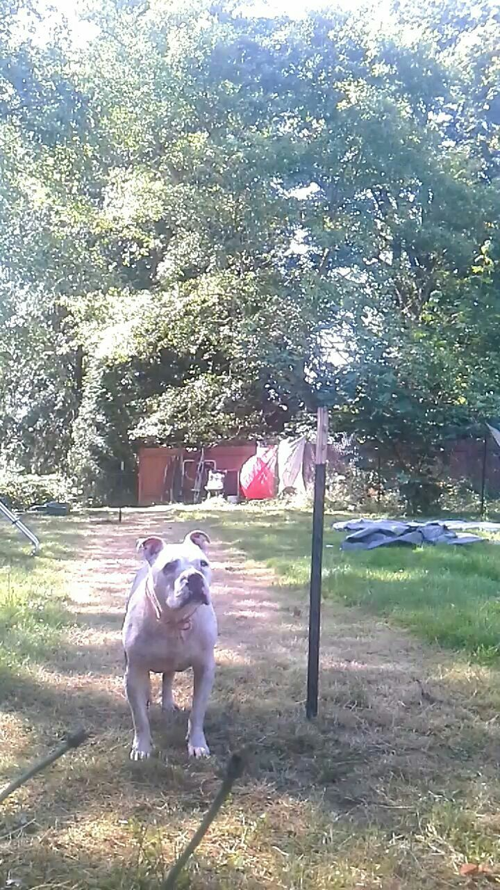 domestic animals, animal themes, mammal, tree, grass, day, one animal, pets, field, no people, sunlight, growth, outdoors, dog, nature
