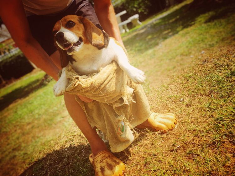 One Animal Dog Pets Domestic Animals Animal Themes Mammal One Person Day Outdoors Grass Pet Owner Nature Low Section Human Hand One Man Only Human Body Part People Beagle เช็ดตัว อาบน้ำ Afterbath