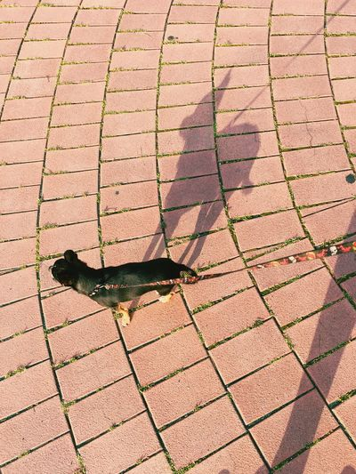 High Angle View Of Dog With Shadow On Floor