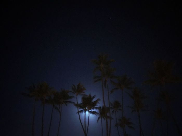 Back in Sweden Palm Tree Nightphotography Moonlight Palm Tree Tree Low Angle View Nature Beauty In Nature Night Silhouette No People Sky Scenics Tranquility Outdoors Tranquil Scene Moon Astronomy Star - Space (null)Hawaii Nature Beauty In Nature