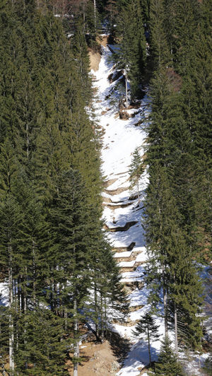 fresh snow canyon in the middle of the coniferous forest in winter Nature Pine Tree Trees Winter Wintertime Canal Canalone Canyon Conifer  Coniferous Tree Danger Fir Forest Foresta Natures Outdoors Pine Tree Snow Woods