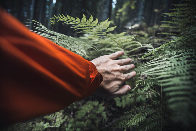 Close up of survival concept of a man looking for help and searching directions in the jungle-forrest The Creative - 2018 EyeEm Awards Beauty In Nature Close-up Coniferous Tree Day Fern Forest Forrest Green Color Growth Hand Human Hand Jungle Land Leaf Leisure Activity Nature One Person Outdoors Plant Plant Part Real People Selective Focus Survival Tree
