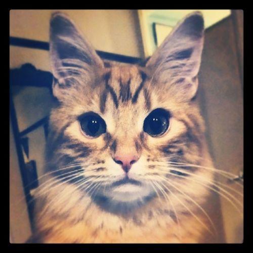 Jiffjaff Kitten Ginger Camerawhore Catobsessed