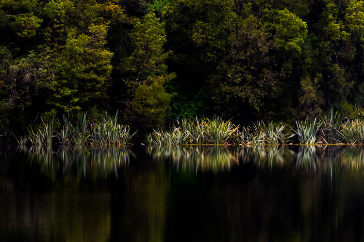 Lake Matheson Reflection WaterPlant Beauty In Nature Day Forest Growth Lake Lily Pad Nature New Zealand No People Outdoors Plant Reflection Reflections Scenics Standing Water Tranquil Scene Tranquility Tree Water Waterfront Waterplants