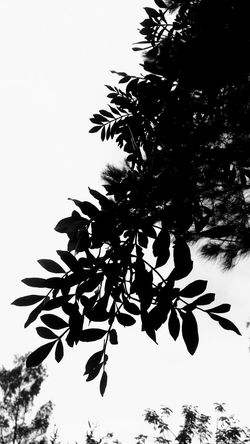 ALL DARK Beauty In Nature Branch Clear Sky Close-up Day Freshness Growth Leaf Low Angle View Nature No People Outdoors Plant Scenics Silhouette Sky Tranquility Tree