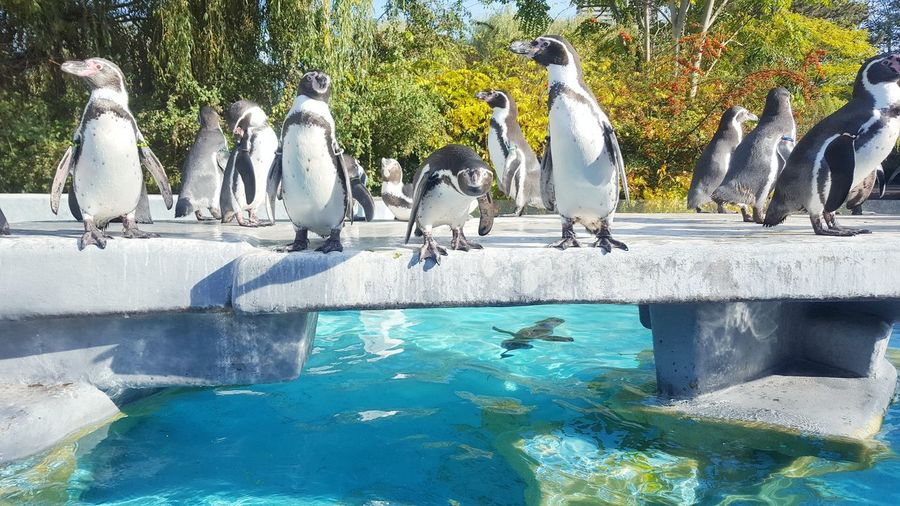 Group of Penguins at Zoo Köln, Cologne Cologne Köln Zoo Group Of Animals Group Looking At Camera Watching Standing Flamingo Colony