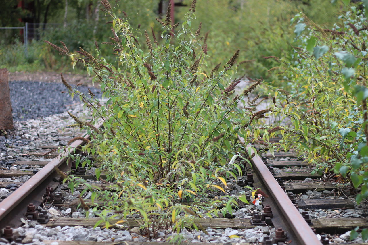 railroad track, rail transportation, track, plant, day, nature, growth, no people, transportation, land, outdoors, green color, field, high angle view, metal, solid, mode of transportation, dirt, tree, focus on foreground
