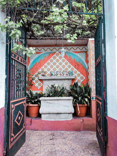 A shrine of kinds Vine Grapevine Fountain Tiles Plants SPAIN Spanish Colorful Shrine Bright Colors Coral Colored Turquoise Colored Niche Water Fountain Architecture Building Exterior Built Structure Plant Entry Entryway Creeper Entrance Wall Whitewashed Door Doorway