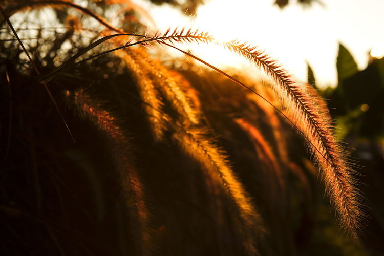 Close-up of plant against sky at sunset