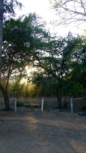 Costa Rica Guanacaste sunshine sunrise sunrays Tree trees sand nature The Secret Spaces Art Is Everywhere The Great Outdoors - 2017 EyeEm Awards Neighborhood Map Sommergefühle Breathing Space Guanacaste  Guanacaste Costa Rica Guanacaste, Costa Rica Beach Beauty In Nature Beach Photography Beach Life Been There. Lost In The Landscape Postcode Postcards This Is Latin America