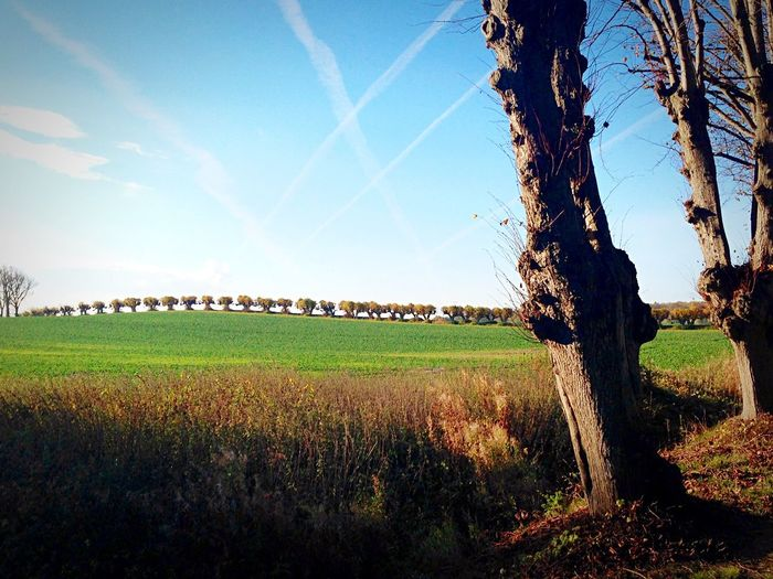 Geschwungen. Avenue Tree Nature Sunlight Beauty In Nature Sky Field Tranquil Scene Landscape Grass Outdoors No People Day Light And Shadow Scenics Sunlight Klūtz Gently Beauty Fields Mecklenburg-Vorpommern Contrail The Great Outdoors - 2017 EyeEm Awards