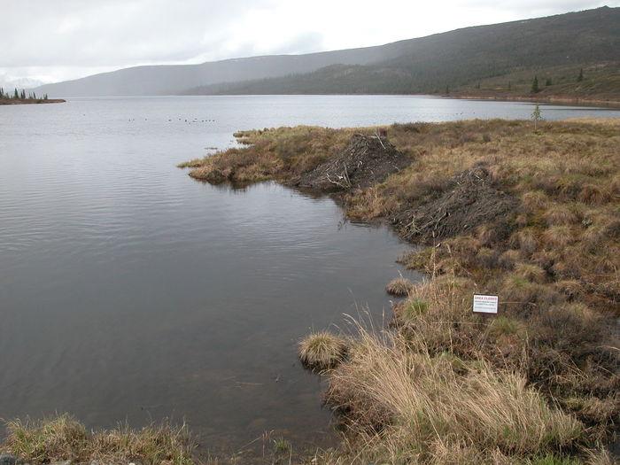 Alaska Beaver Lodge Beavers Day Denali Denali National Park Lake Nature No People Outdoors Sky Water