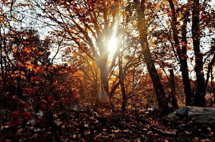 Autumn. Color EyeEm Nature Lover Autumn Leaves Tree Sun Tranquility Sunbeam Sunlight Tranquil Scene Beauty In Nature Scenics Autumn Change Season
