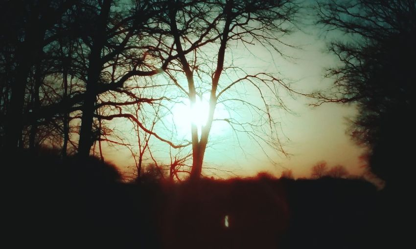 Nolookingandnoturningback Hope In Nature Riseabove Faith Hope Soul Searching Intense Silhouette Sky Beauty In Nature Sunset Tranquility Tree Sun Tranquil Scene No People Sunlight Scenics - Nature Idyllic Cloud - Sky Branch Outdoors Nature Sunbeam