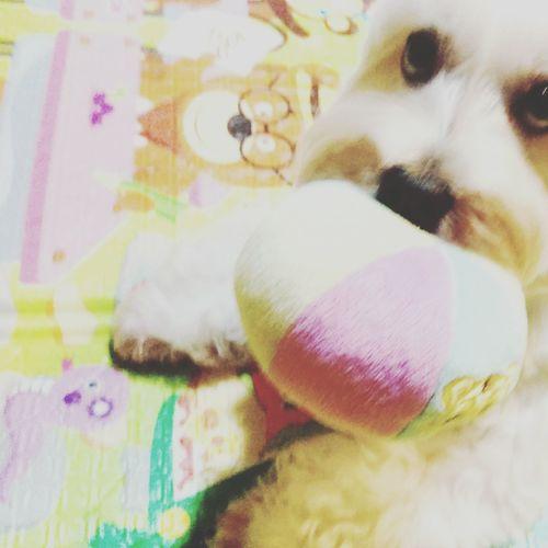 She Is My Sister 繼薇 I Love My Dog Family❤ Chi-wei Smile Animals Dog❤ My Dog <3 Taking Photos EyeEm Taiwan 哥想睡,別玩了(´・_・`)
