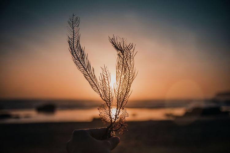 Sunset Focus On