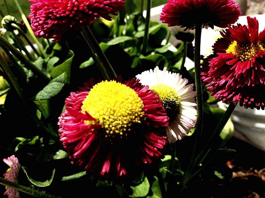 I Love Flovers Blumen