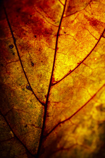 Close-up of wet autumn leaves