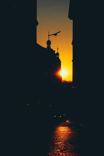 sunrise Fly
