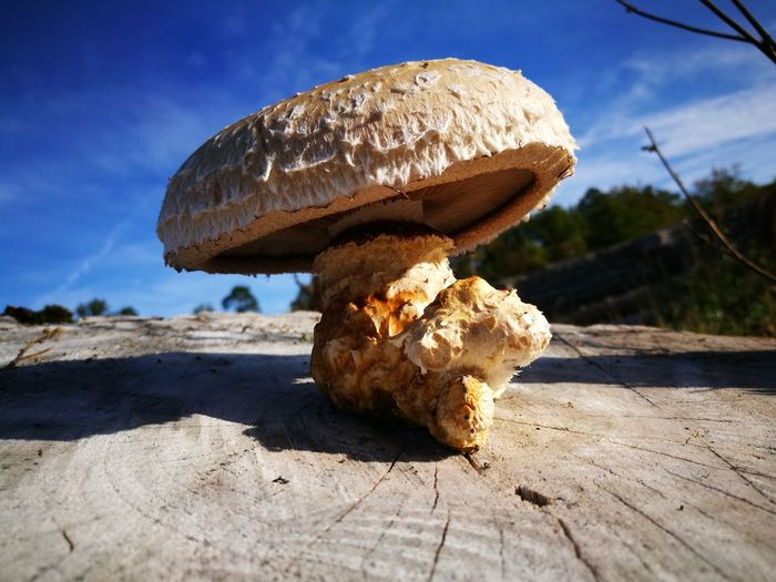 Close-up of mushrooms on rock against sky