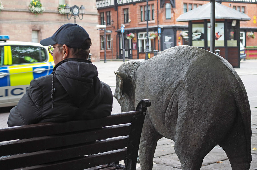 A Taste Of Chester, UK British Police Elephant Man Architecture Baby Elephant Baseball Cap Building Exterior Built Structure Day Domestic Animals Mammal Men Occupation One Person Outdoors People Police Car Real People Rear View Sitting On A Bench Standing Warm Clothing This Is Aging