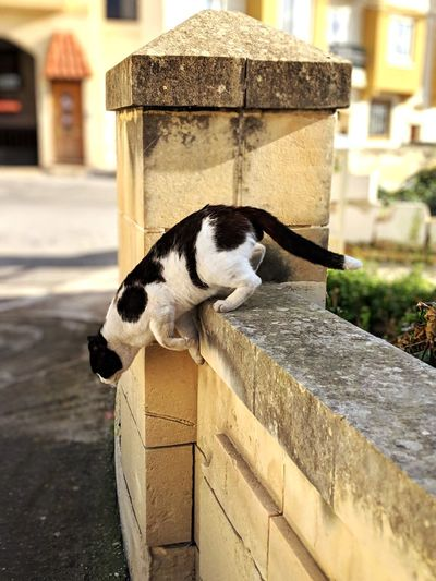 View of a cat on retaining wall