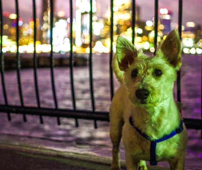Hoboken - August 2017 Dog Domestic Animals Pets Animal Themes One Animal Focus On Foreground Looking At Camera