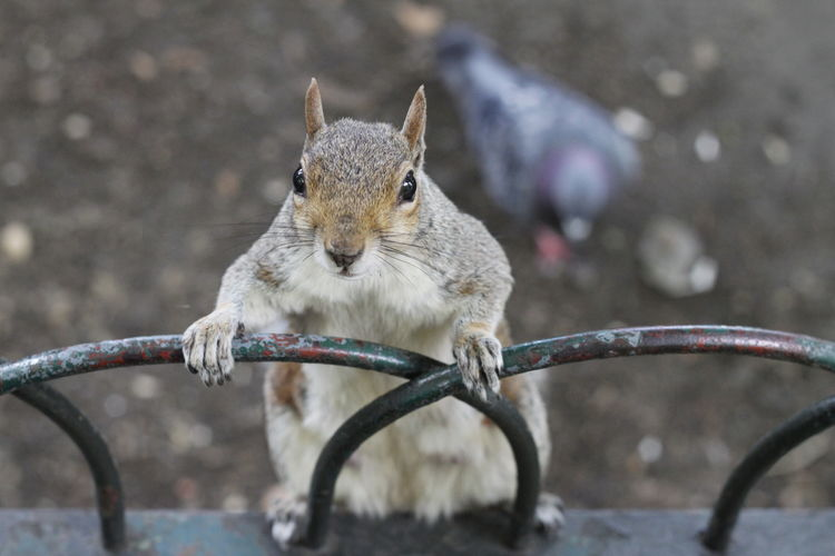Close-up of squirrel on branch
