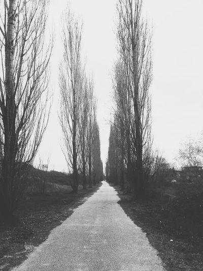 👽👽 Blackandwhite Nature Winter Trees Alone Time Walking Relaxing Aliens Creepy Nature Shots