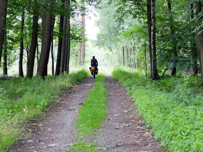 Adventure By Bike Adult Adults Only Adventure Beauty In Nature Bicycle Bike Packing Bike Touring Cycling Cyclo Travel Day Forest Full Length Leisure Activity Lifestyles Men Nature One Man Only One Person Only Men Outdoors Real People Rear View Road Single Lane Road The Way Forward Transportation Tree Walking
