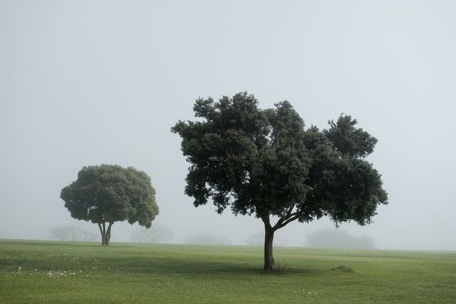 Tree Nature Landscape Grass Beauty In Nature Environment Outdoors No People Tranquility Scenics Rural Scene Sky Day California Travel Destinations Streetphotography Fujifilm_xseries Foggy Fog Misty Mood Backgrounds Malibu