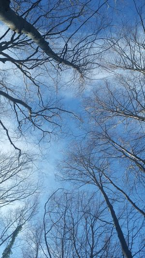 Winter trees Trees Trees And Sky Showcase: January Winter Trees Winter Nature Sky And Trees Blue Wave Nature's Diversities Original Experiences in Fageda D'en Jorda Fine Art Photography