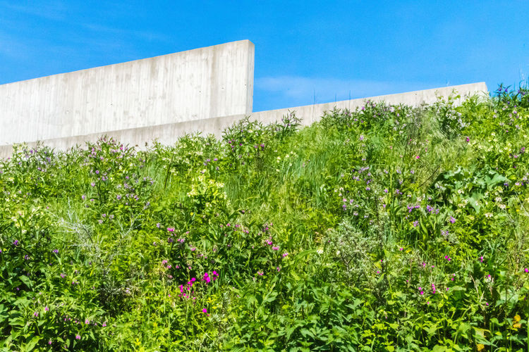 Nature and concrete Colors EyeEm Best Shots EyeEm Best Shots - Nature EyeEm Nature Lover EyeEm Selects EyeEm Gallery EyeEmBestPics Green Green Color Nature Plant Background Backgrounds Blue Sky Commercial Concrete Concrete Wall Contradictory Effect Eye4photography  Flower