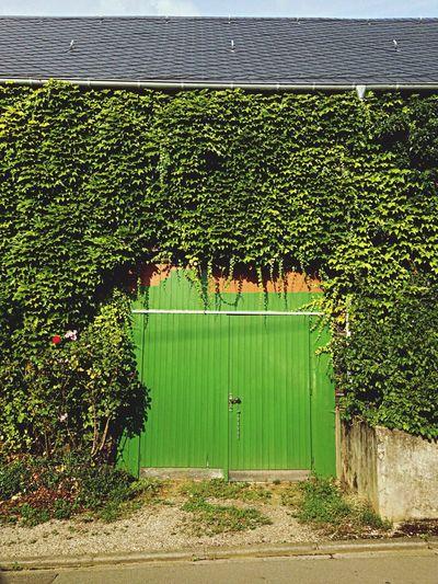 House Plants Door Mosel